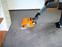 Bild 1 ACS-Teppichboden-u. Polsterreinigung in Mannheim