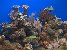 Korallenriff, Meerwasseraquarium, Salzwasseraquarium