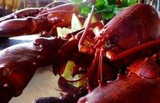 Delikatessen, Feinkost, Meeresfrüchte, Hummer