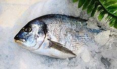 Fisch, Fischmarkt, frisch, Feinkost