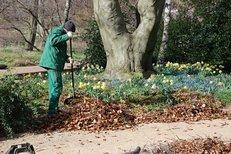 Gartenarbeit, Laub, Park