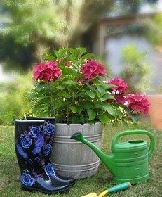 Schaufel, Gartenarbeit, Garten, Blumen, Grün