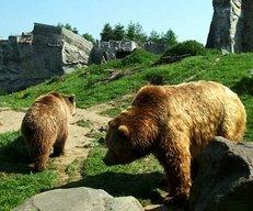 Bären, Felsen, Zoo, ZOOM Gelsenkirchen