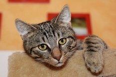 Katze, Katzenpension, Tierheim, Urlaub, Haustiere