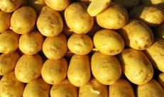 Kartoffeln, Landwirtschaft, Ernte