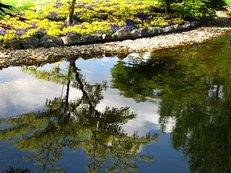 Planung, Garten, Teich
