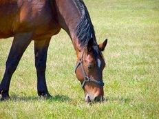 Reiterhof, Pferd, Wiese, Weiden