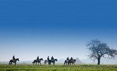 pferd, reiten, reitschule