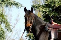 Sattel, Reiten, Pferd