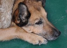 Tierarzt, Hund, Haustier, Behandlung