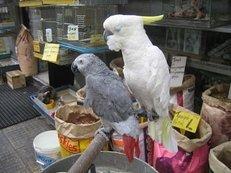 Tierhandlung, Vögel, Papagei, Sittich