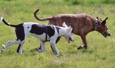 Hunde, Auslauf, Bewegung