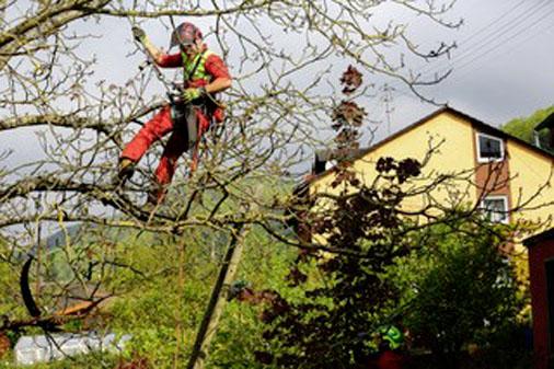 Hautz Baum- und Landschaftspflege