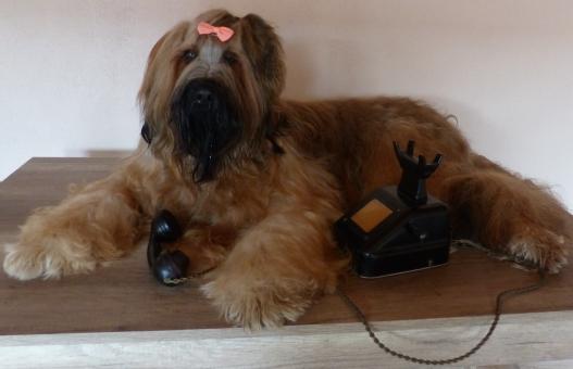 HUNDESALON-MATTIE/Hundefrisuer&Grooming Services