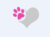 Logo von Du und Dein Hund! Yvonne Schirmer